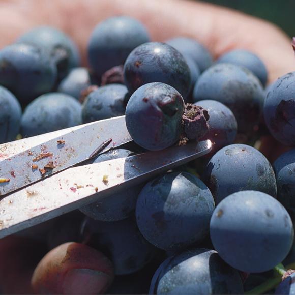 la-nostra-uva